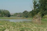 Der Ebro ist ein perfektes Welsparadies