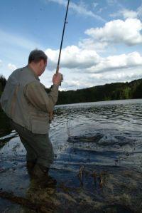 Natürlich sind Hechte auch im Flachwasser zu finden!