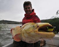 1,70er Goldfisch